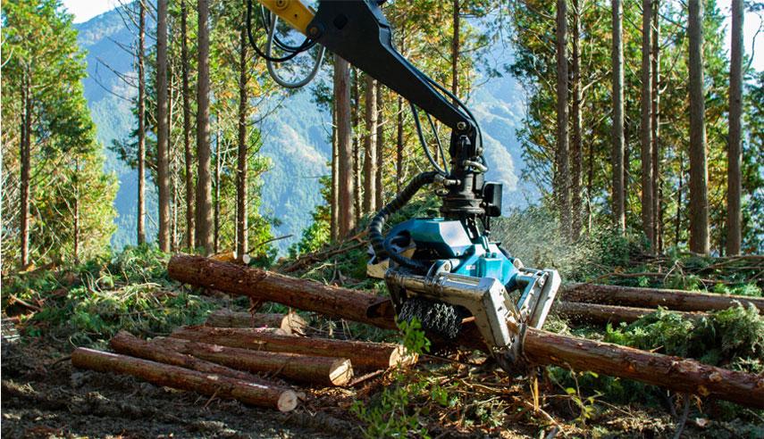 間伐材から国産材の問題を知る